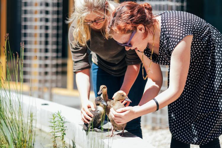 why study master of entrepreneurship australia